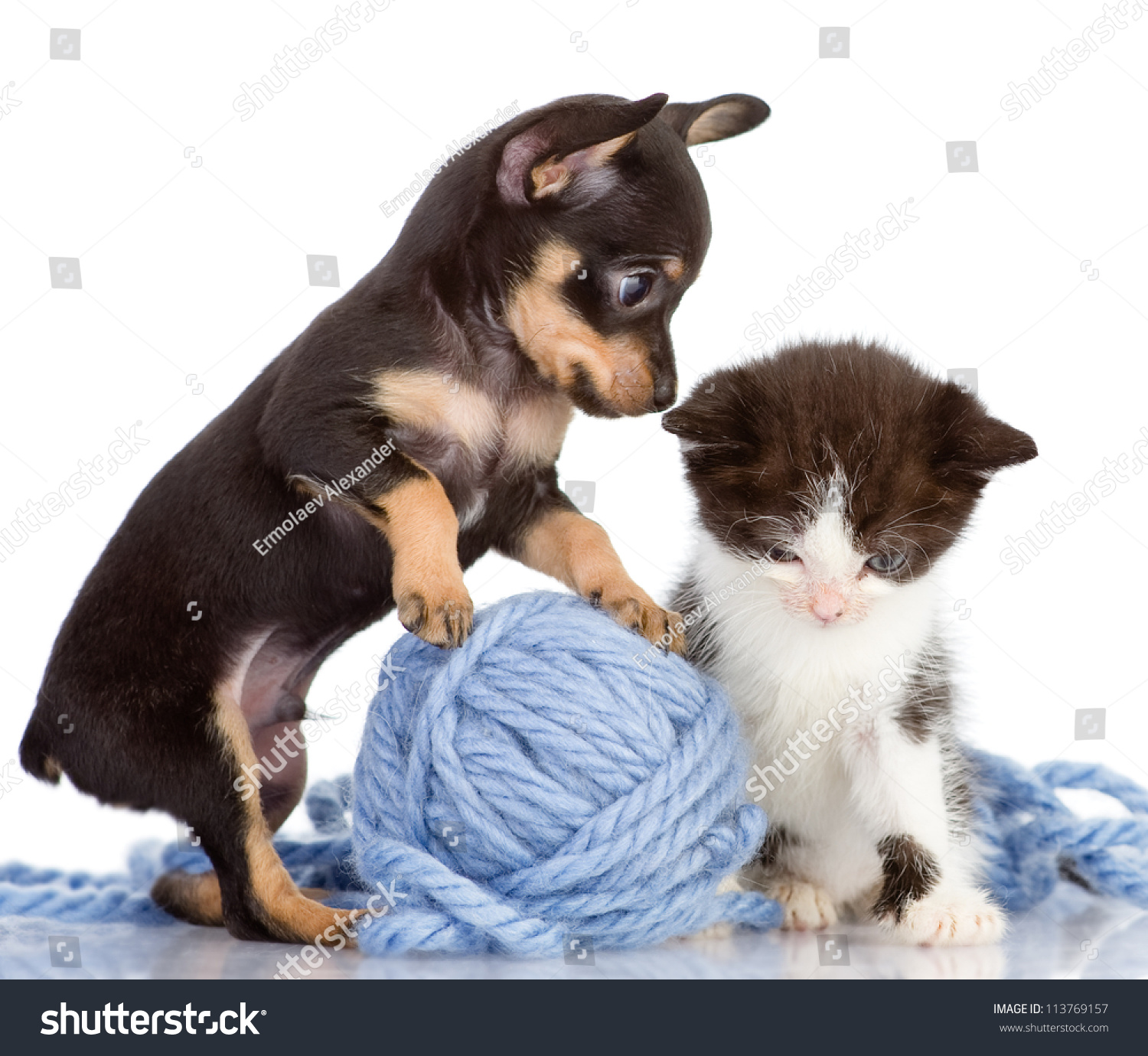 Kittens And Puppies To her Animals 2016