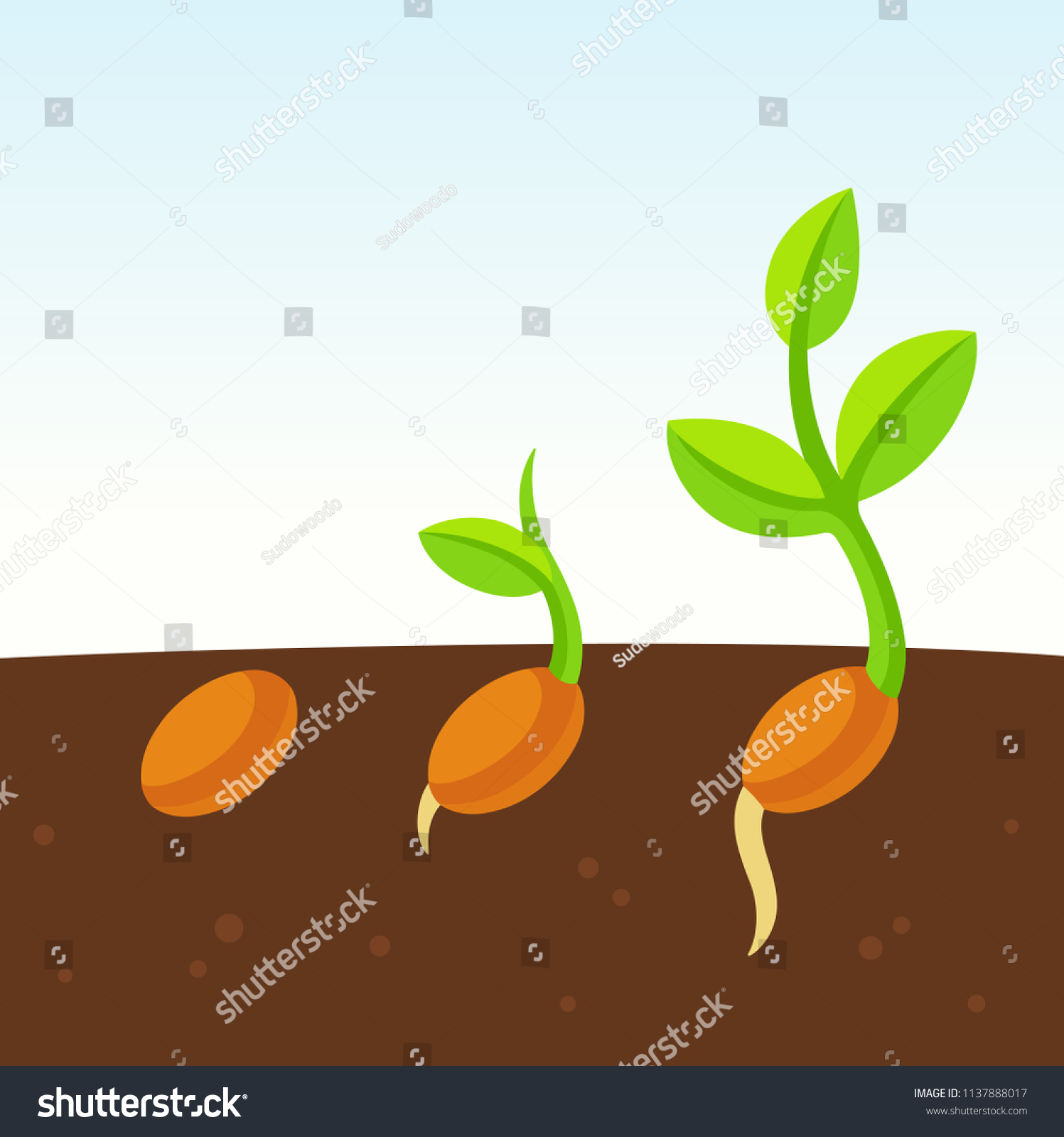 Little Growing Plant Cartoon Illustration Seed Stock Vector Royalty Free 1137888017