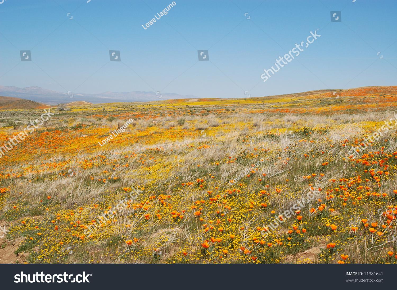 spring wildflowers in antelope - photo #18