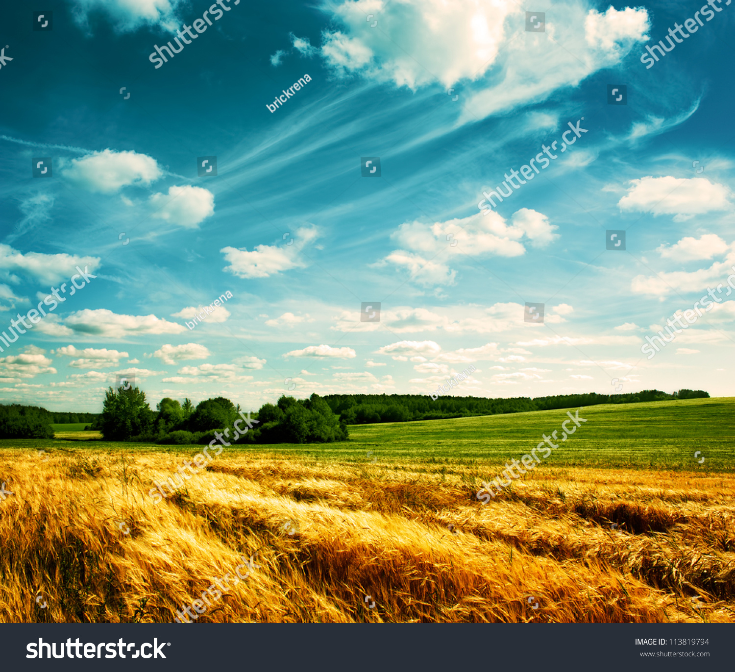 Summer Landscape with Wheat Field and Clouds #113819794
