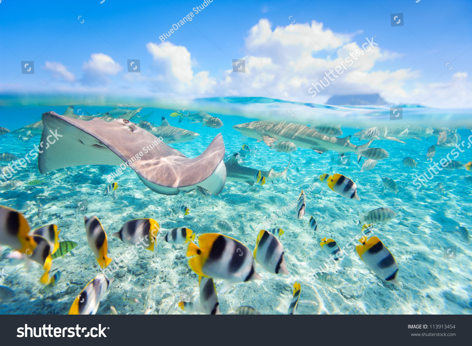 Colorful fish stingray and black tipped sharks underwater for Bora bora fish