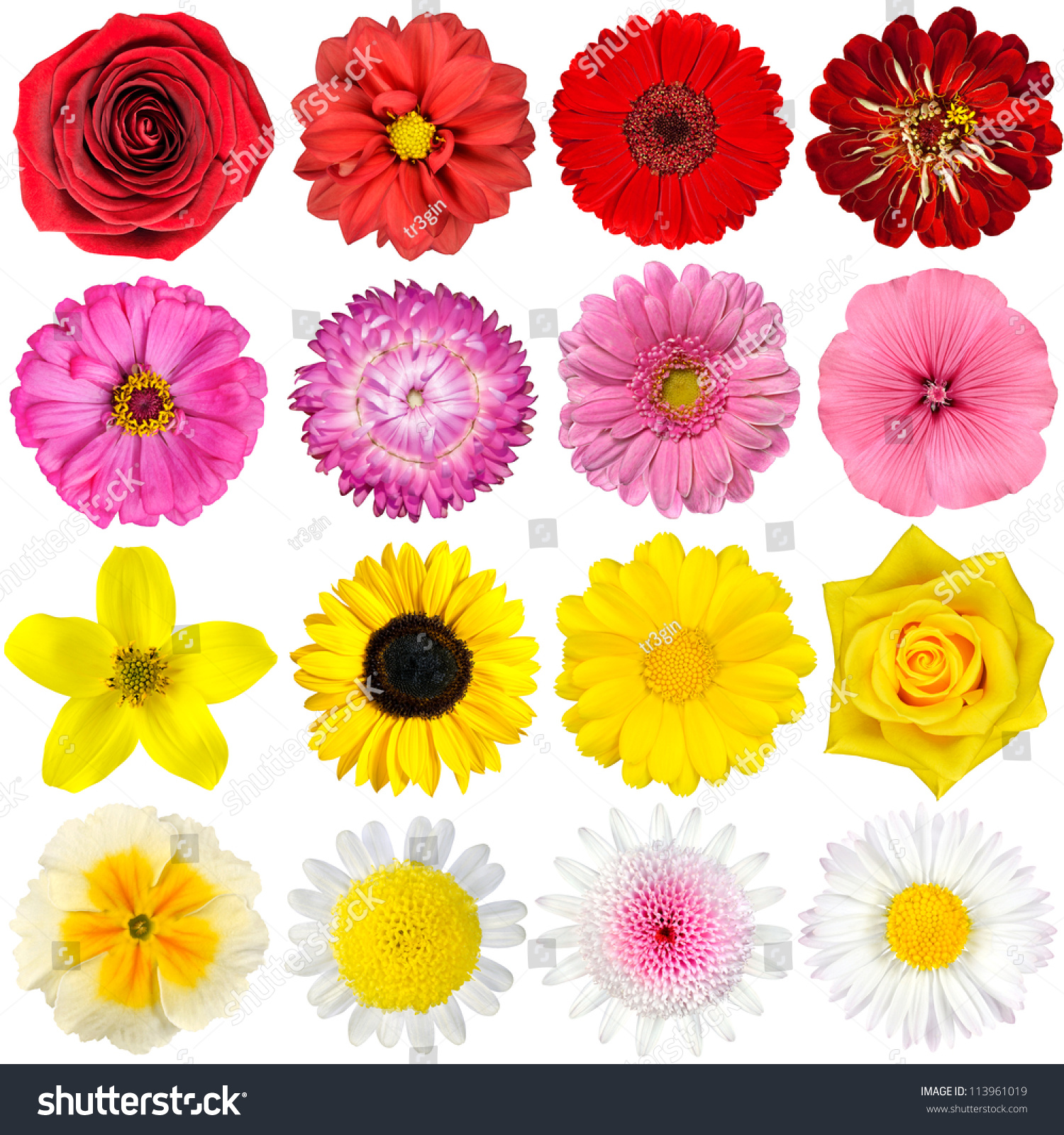 Similar images stock photos vectors of big selection various big selection of various flowers isolated on white background red pink yellow mightylinksfo