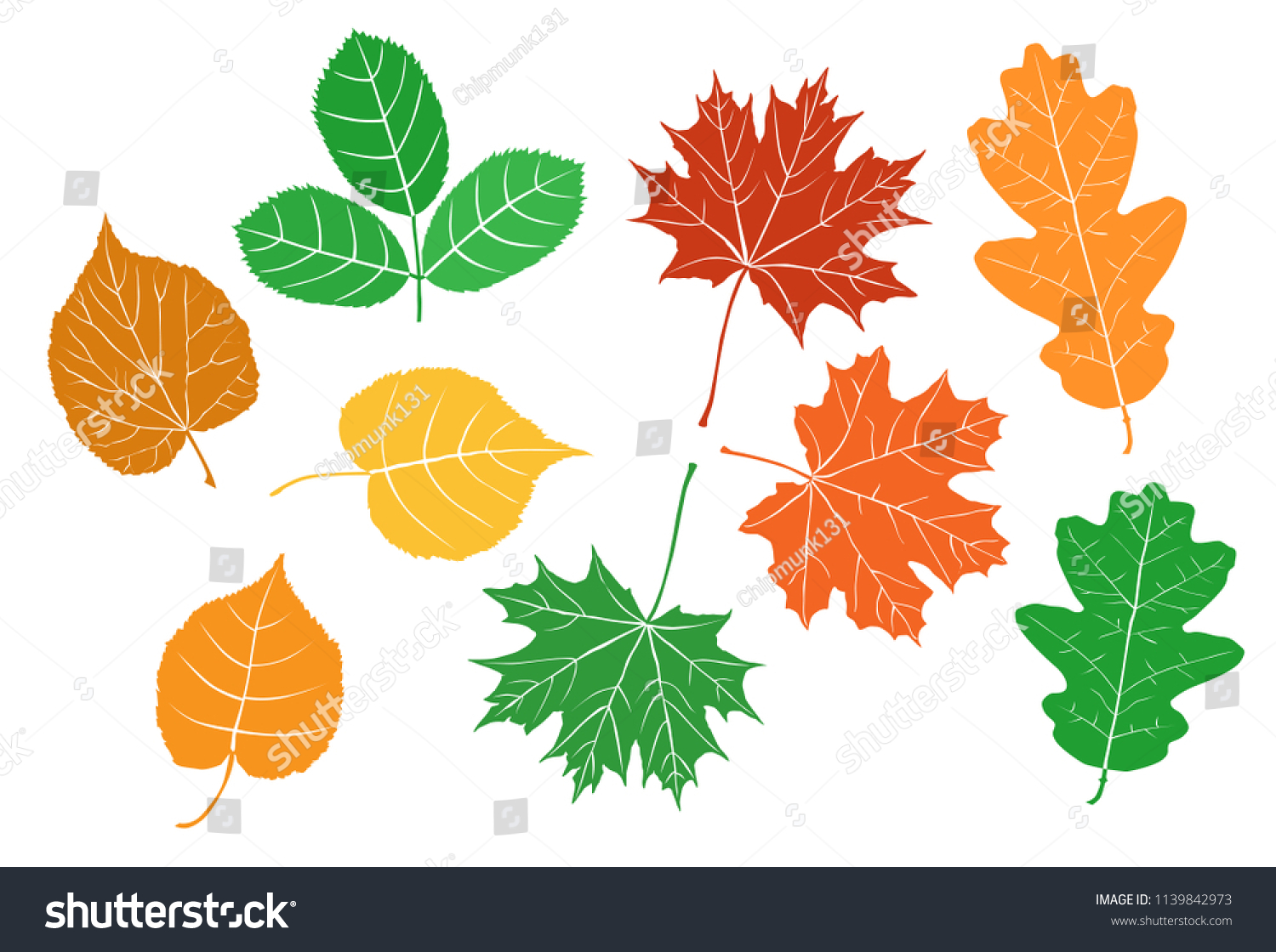Collection Leaves Trees Different Types Branches Stock Vector
