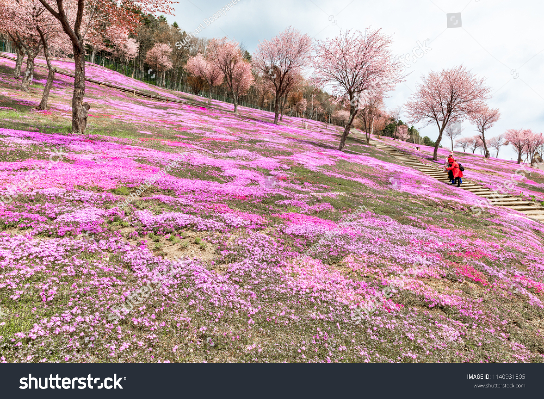 Takinouehokkaidojapanmay 112018 Tourists Walking Around Pink Stock