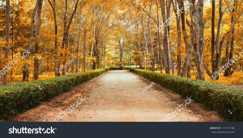 Panorama Pathway Beautiful Autumn Park Landscape Stock Photo ...