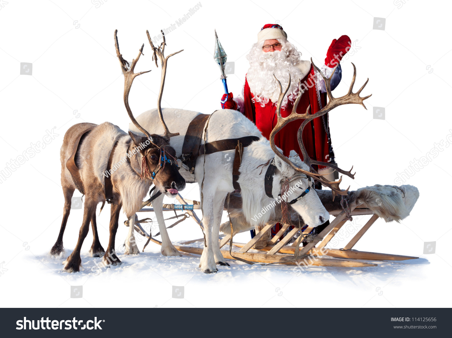 Santa claus near his reindeers harness stock photo