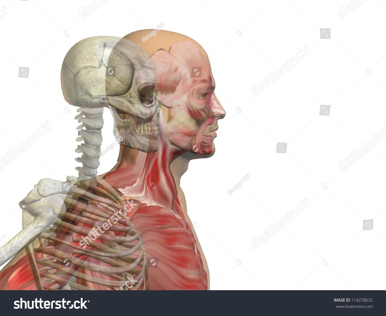 Anatomy Concept Conceptual Human Man Body Stock Illustration ...