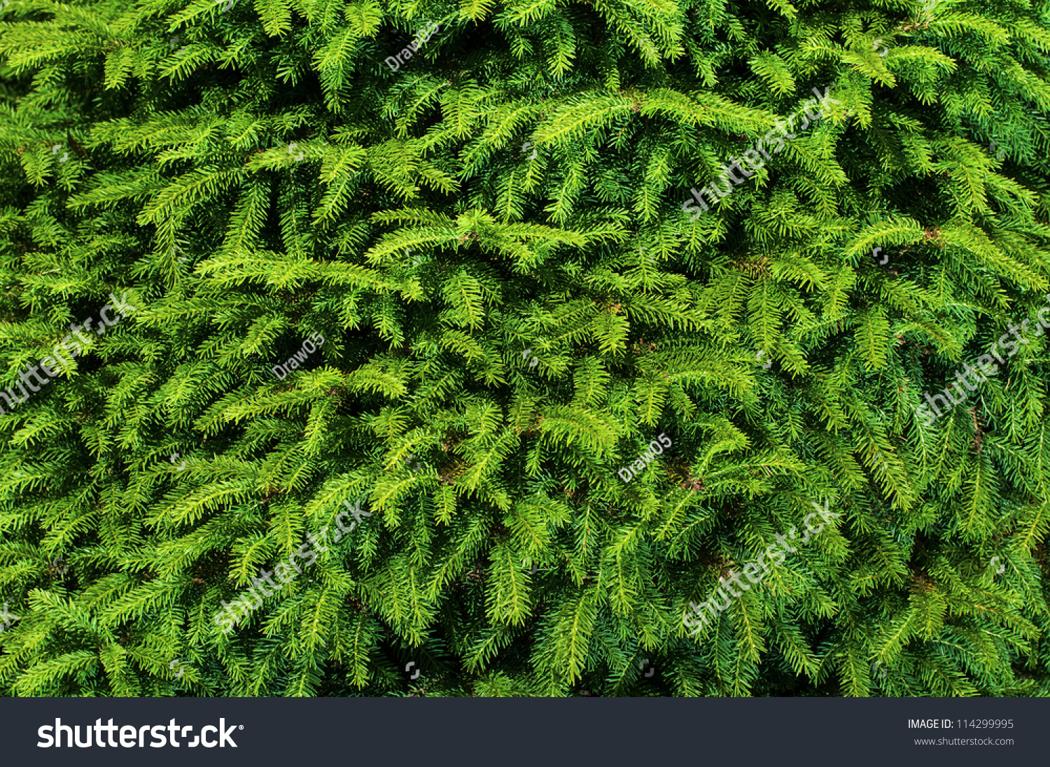 Background Christmas Tree Branches Stock Photo 114299995 ...