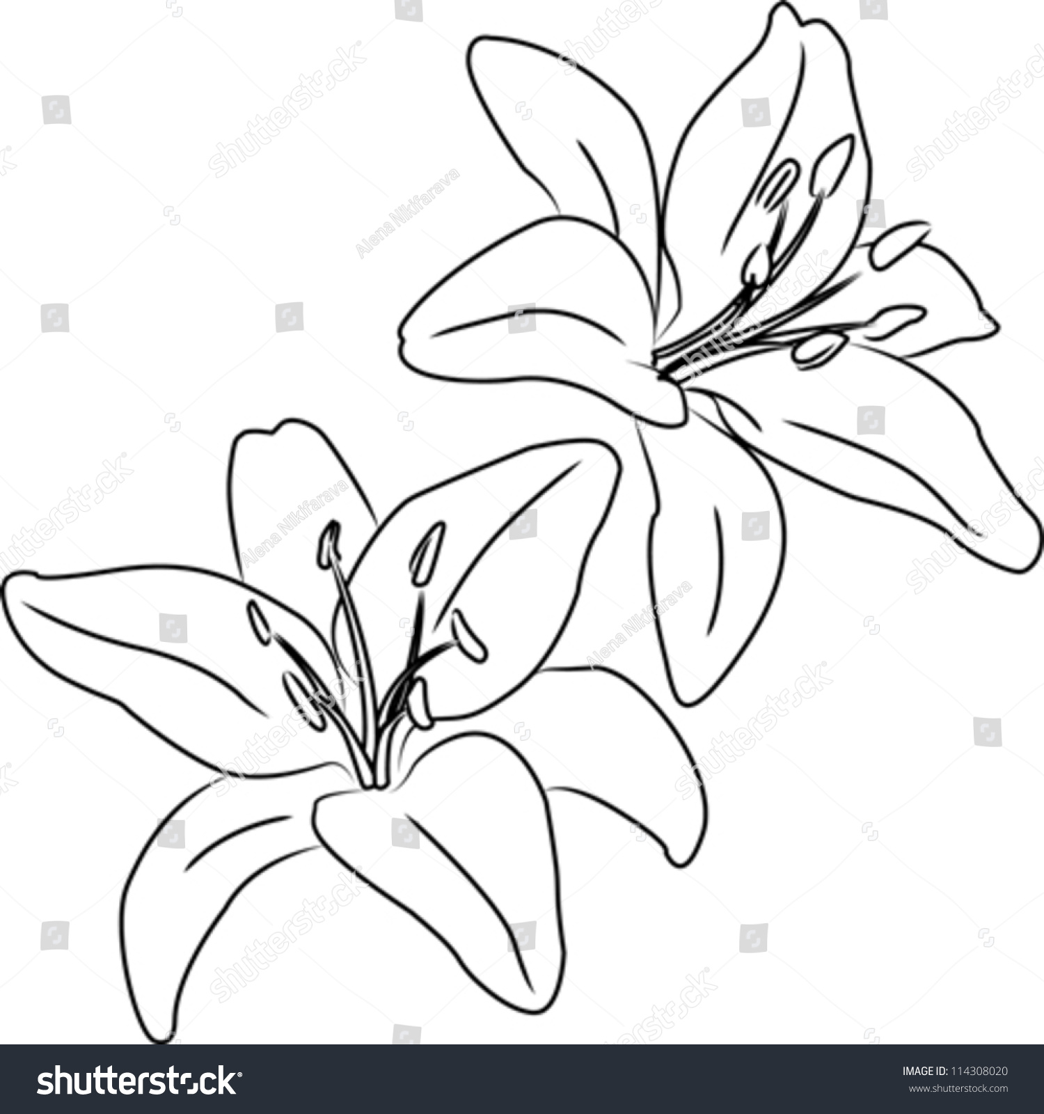 Line Drawing Flower Vector : Eletragesi easy flower drawing outline images