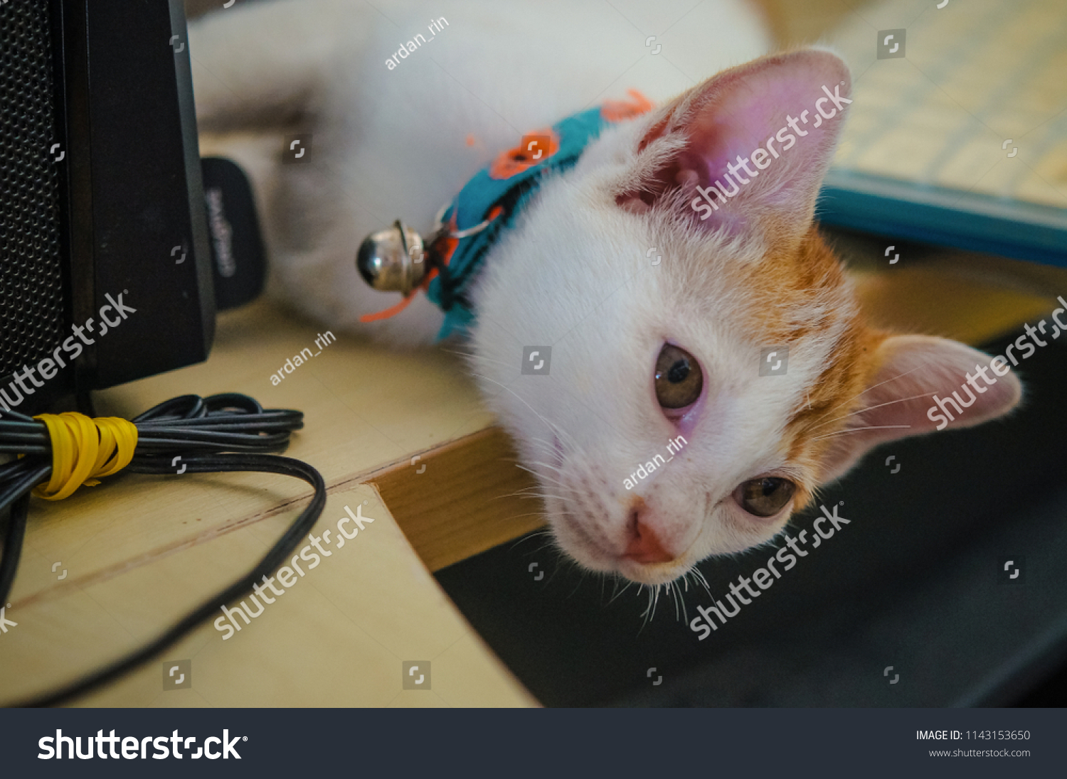 Young Crazy Surprised Cat Wearing Collar Stock Photo (Edit