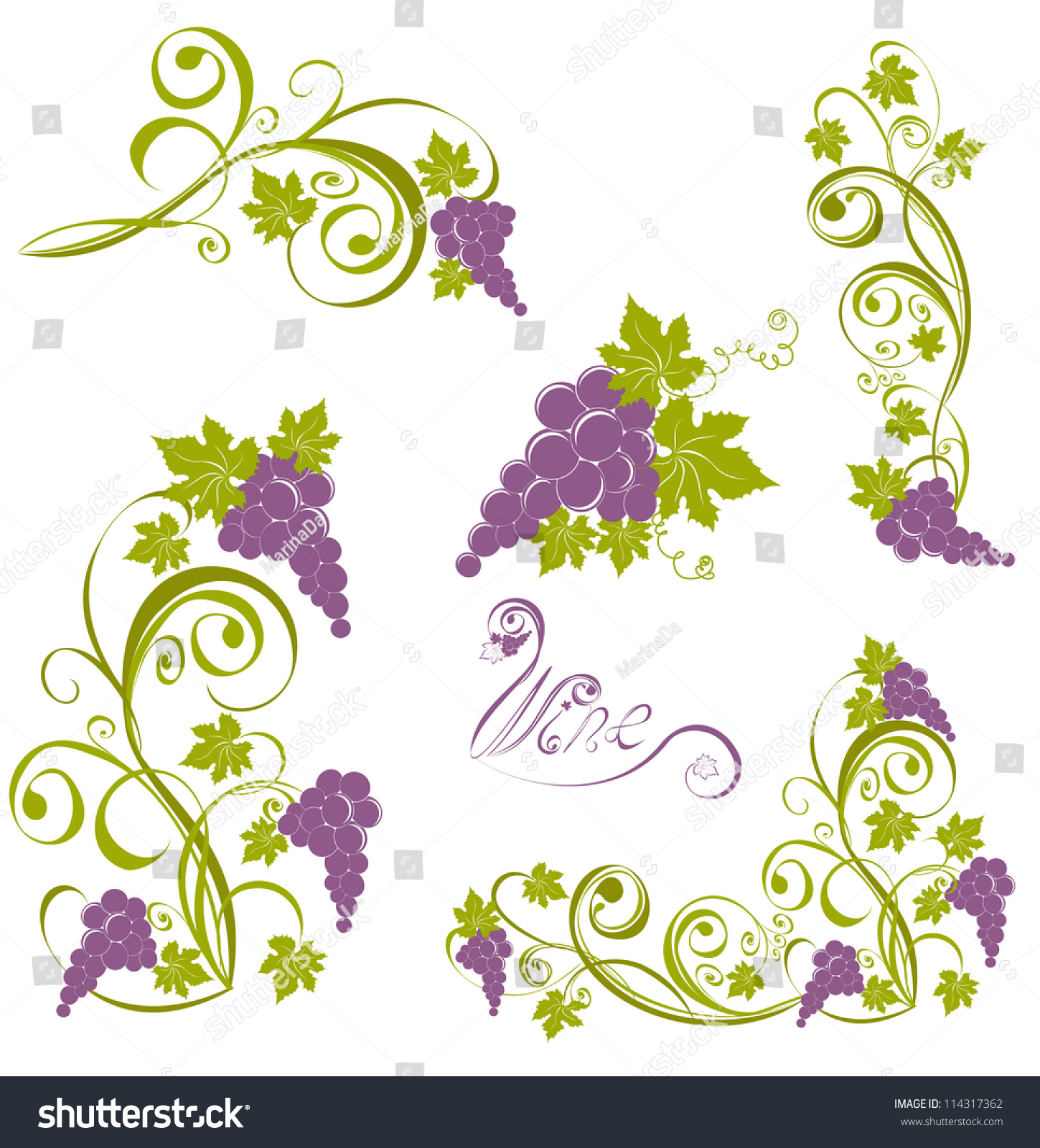 Grapevine. Vector Wine Design Elements - 114317362 ...