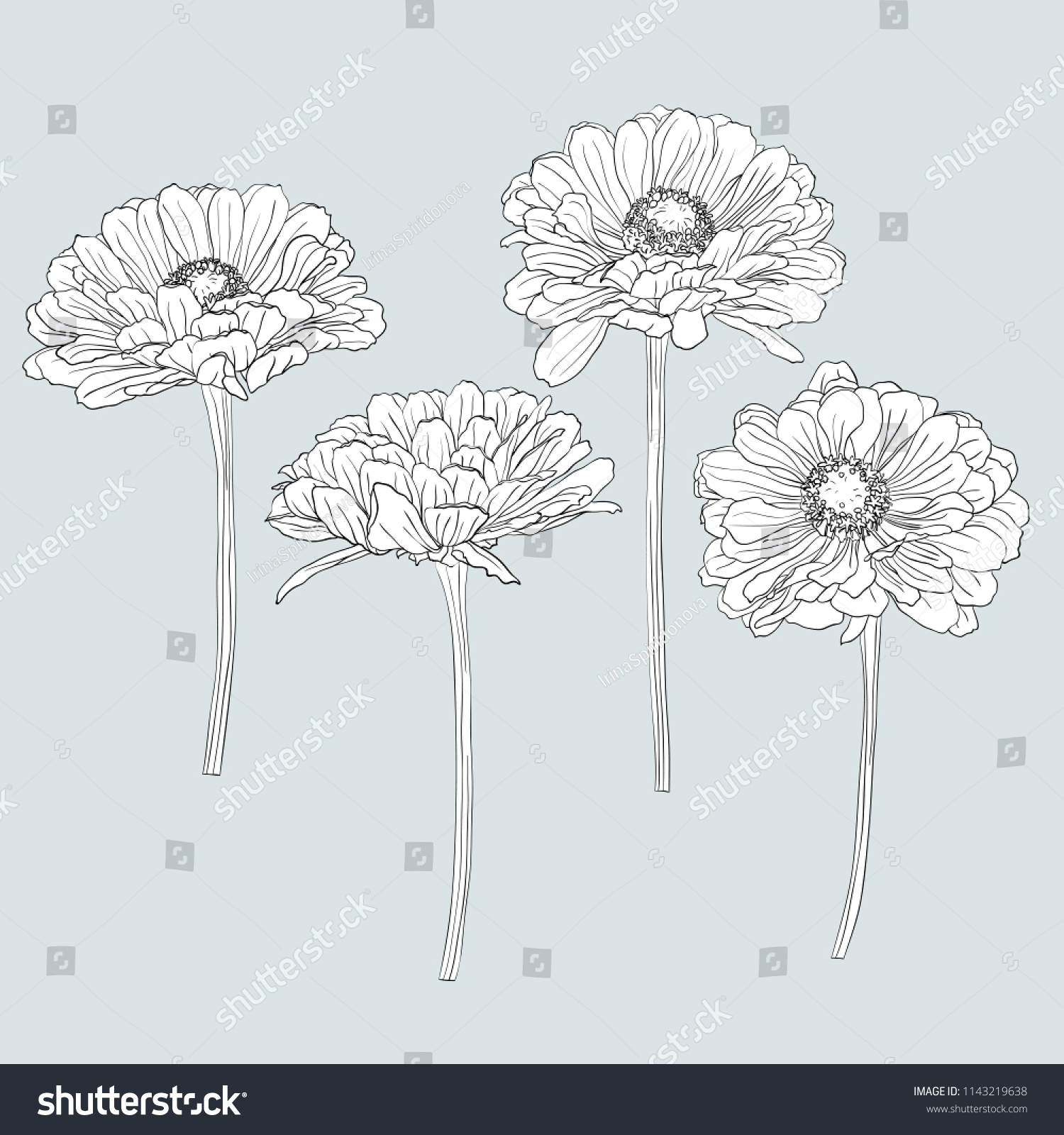 Drawing Flowers Illustration Vector And Clip Art Ez Canvas