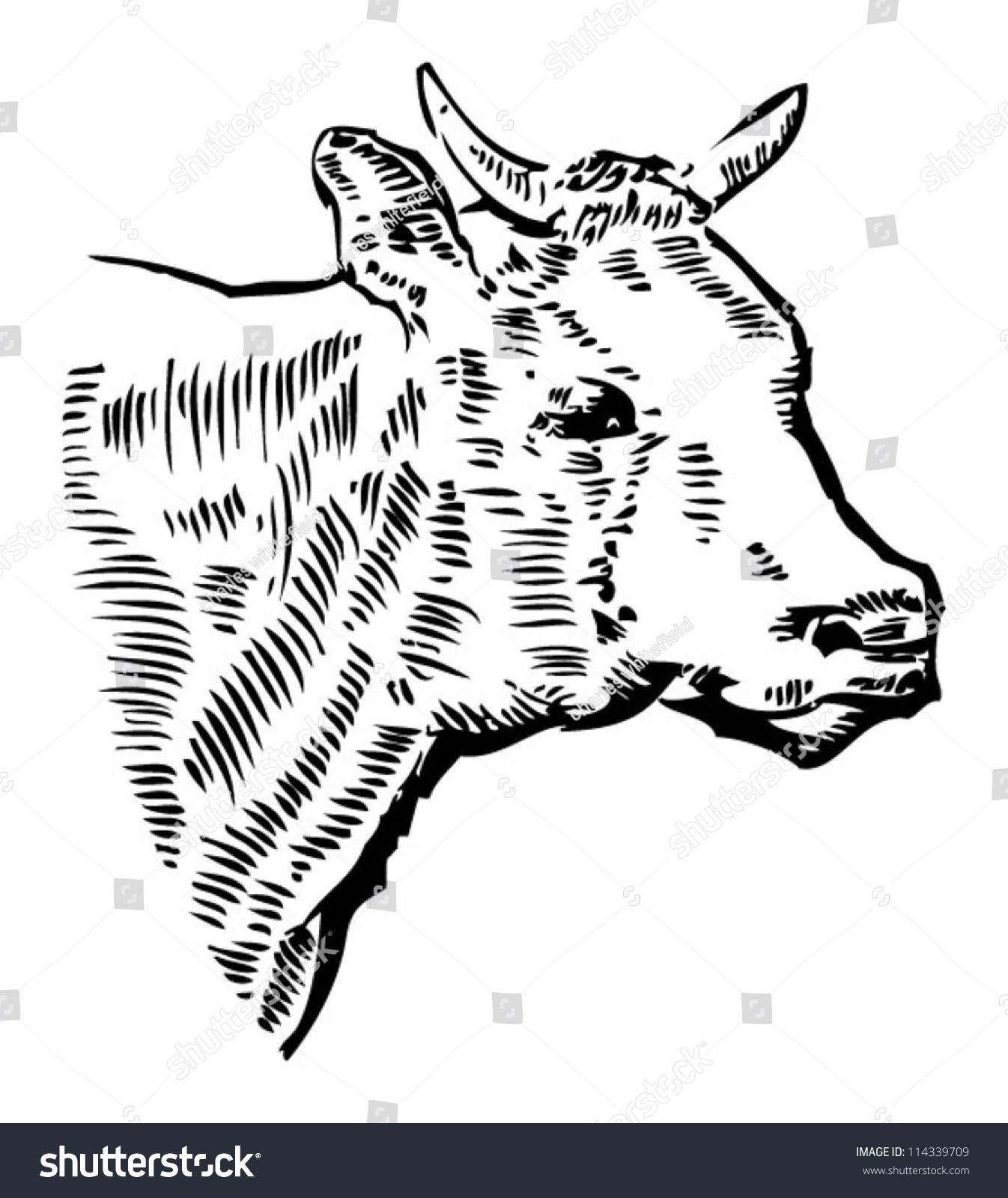 Uncategorized Cow Head Drawing cow head drawing stock vector 114339709 shutterstock drawing