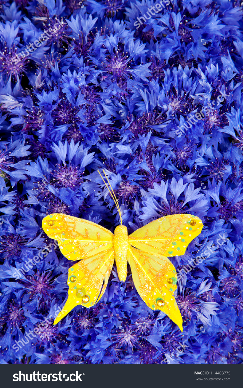 Spring Flowers Blue Cornflower Yellow Butterfly Stock Photo Royalty