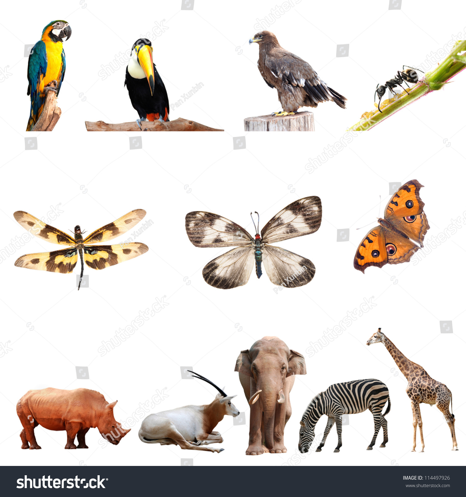 animal collection isolated shutterstock