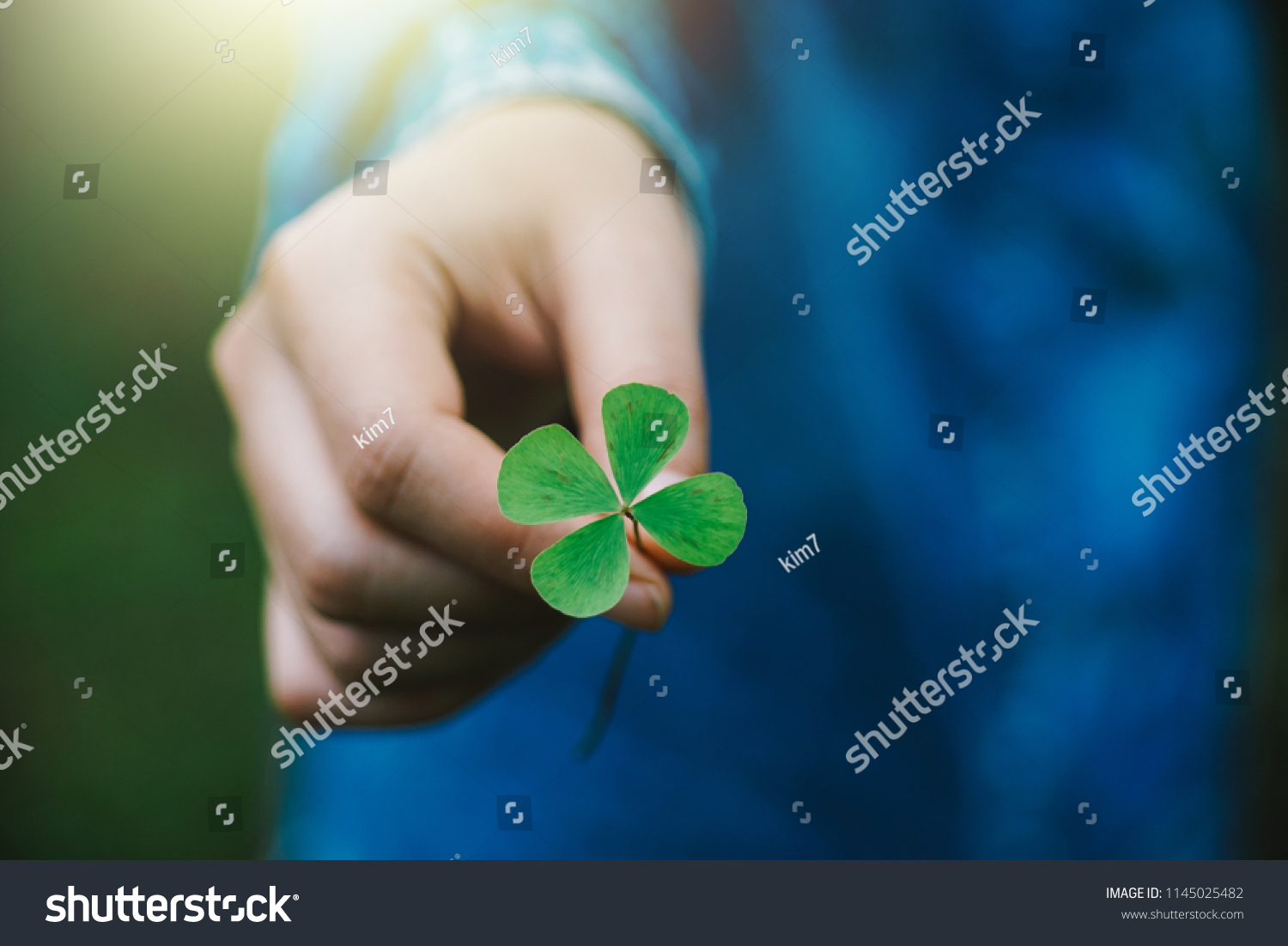 Green clover leaf in hand. #1145025482
