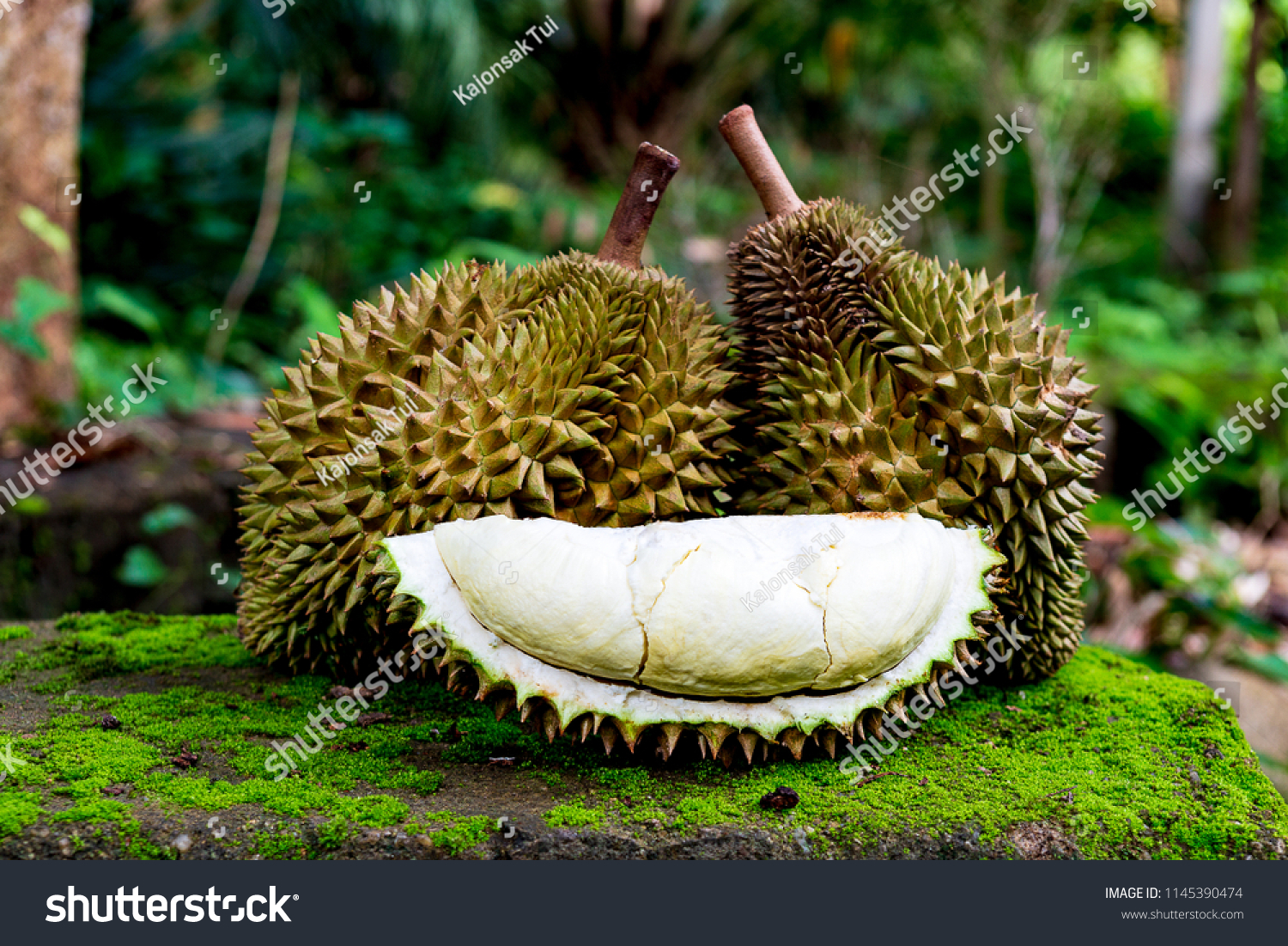 Closed Group Durian Unpeeled Ripped Show Stock Photo (Royalty Free ...
