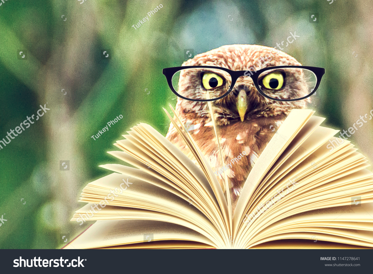 stock-photo-an-owl-animal-with-glasses-i