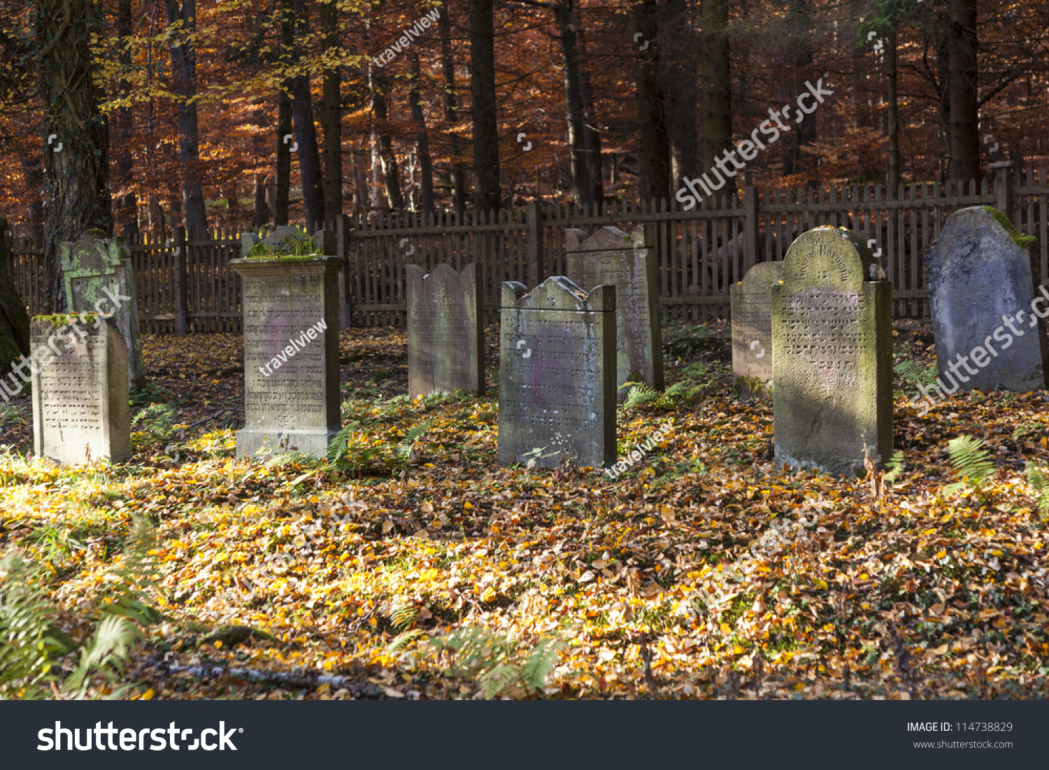 cemetery in the forest - photo #41