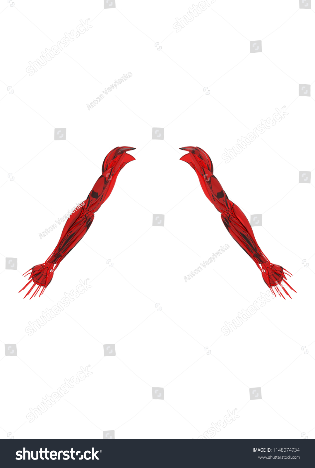 3 D Illustration Human Arms Muscles Stock Illustration 1148074934