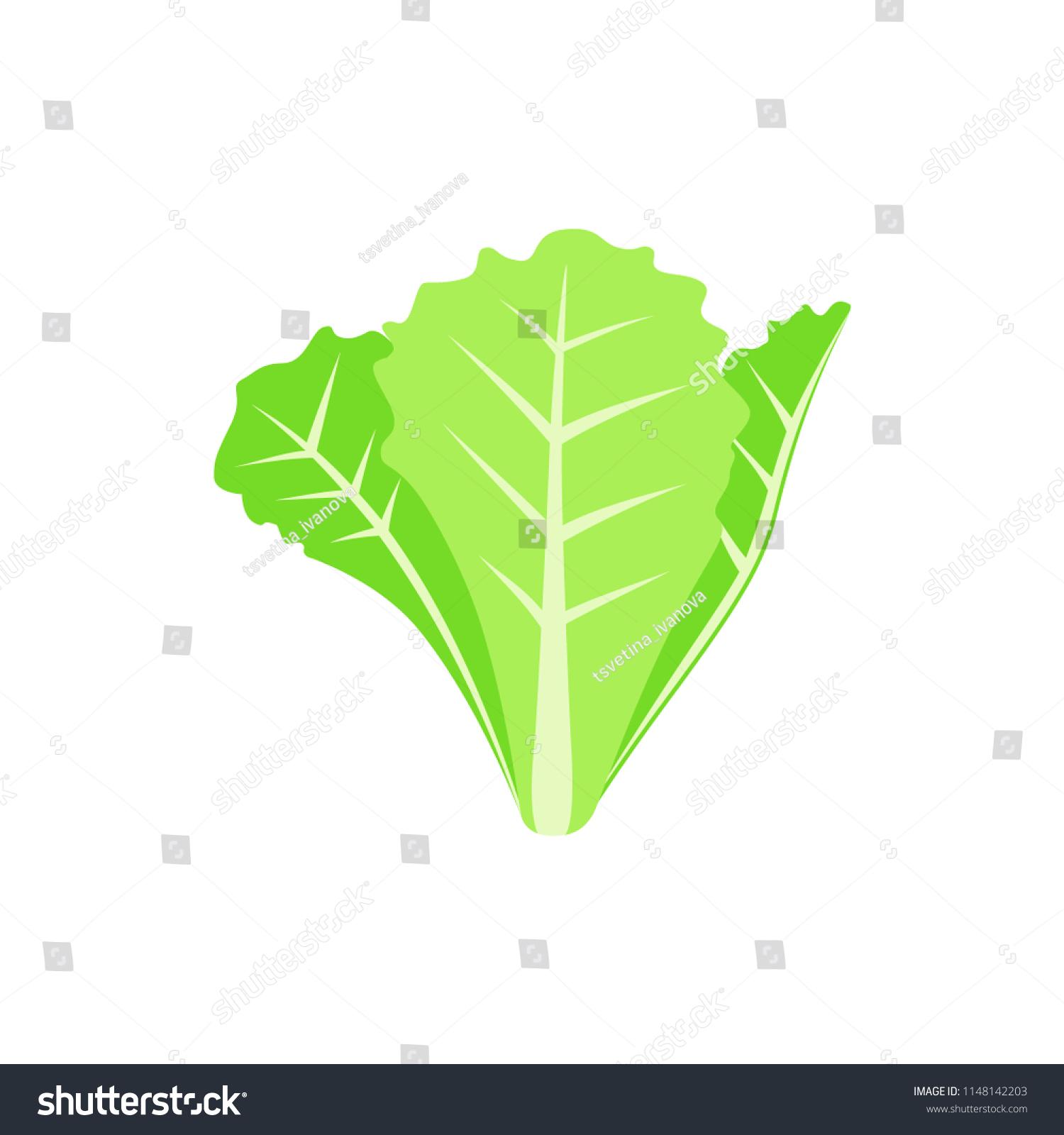 14+ Lettuce Clipart - Preview : Lettuce Clipart L | HDClipartAll