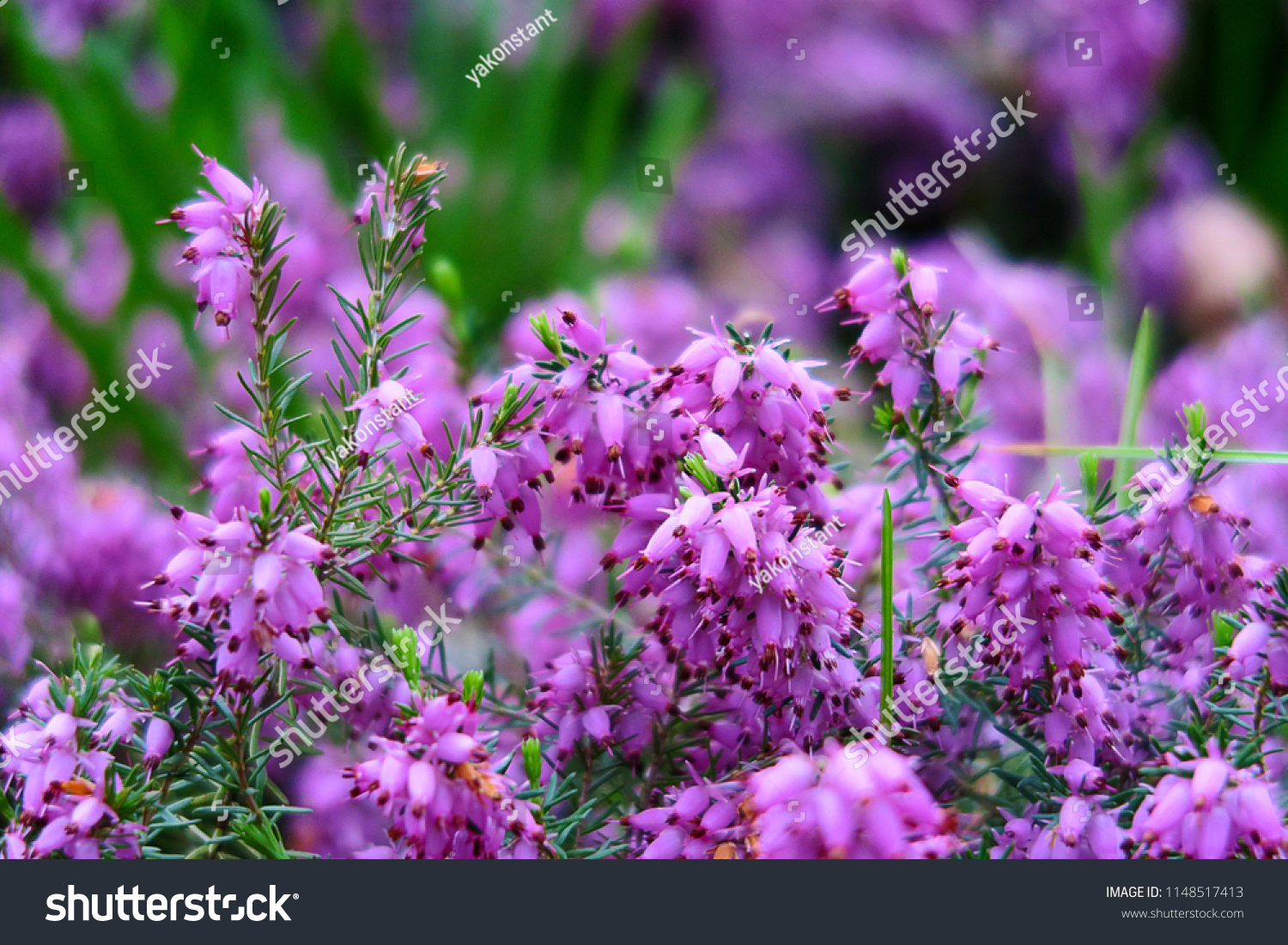 Natural Floral Background Soft Purple Pink Stock Photo Edit Now