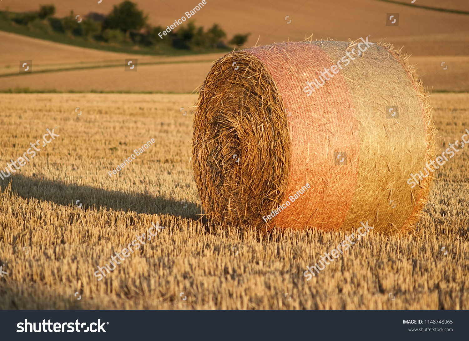 stock-photo-close-up-of-an-isolated-hay-