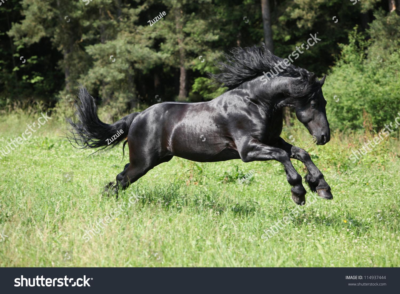 Black Friesian Stallion Jumping Stock Photo Edit Now 114937444