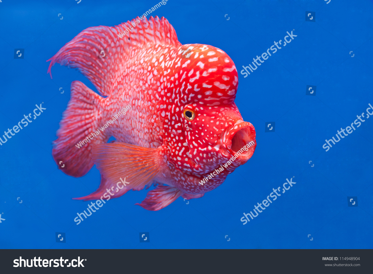 Colorful Fish Swim Under Water Calm Stock Photo 114948904