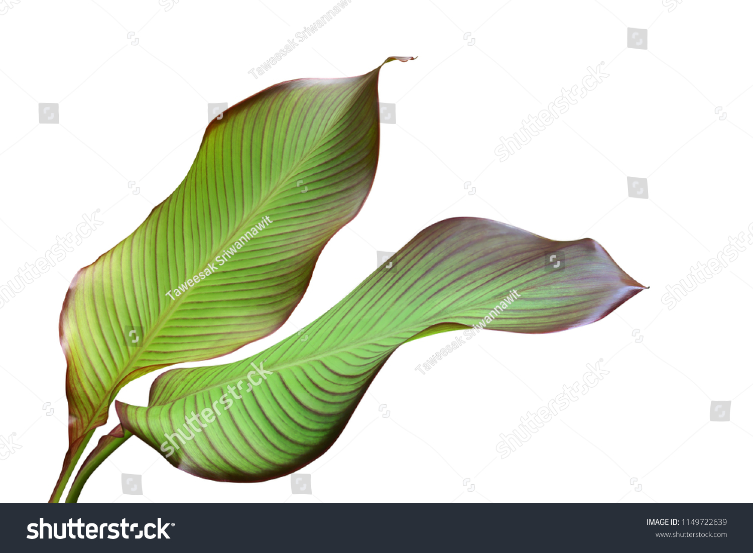 Tropical Green Leaves Edible Plant Canna Stock Photo Edit Now 1149722639 Enhance your tropical round cake design by using these photocake edible image® strips. shutterstock