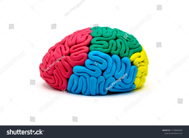 Clay Brain Diagram - Electrical Wiring Diagram House •