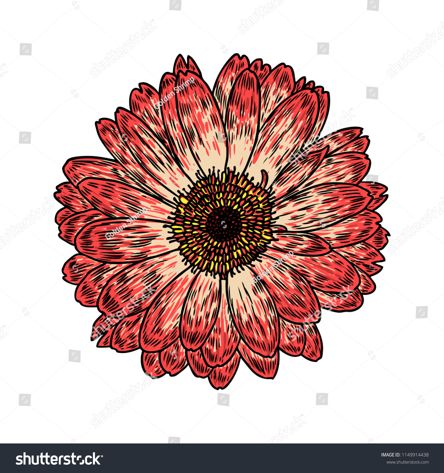 Daisy Floral Botany Sketch Daisy Flower Stock Vector Royalty Free