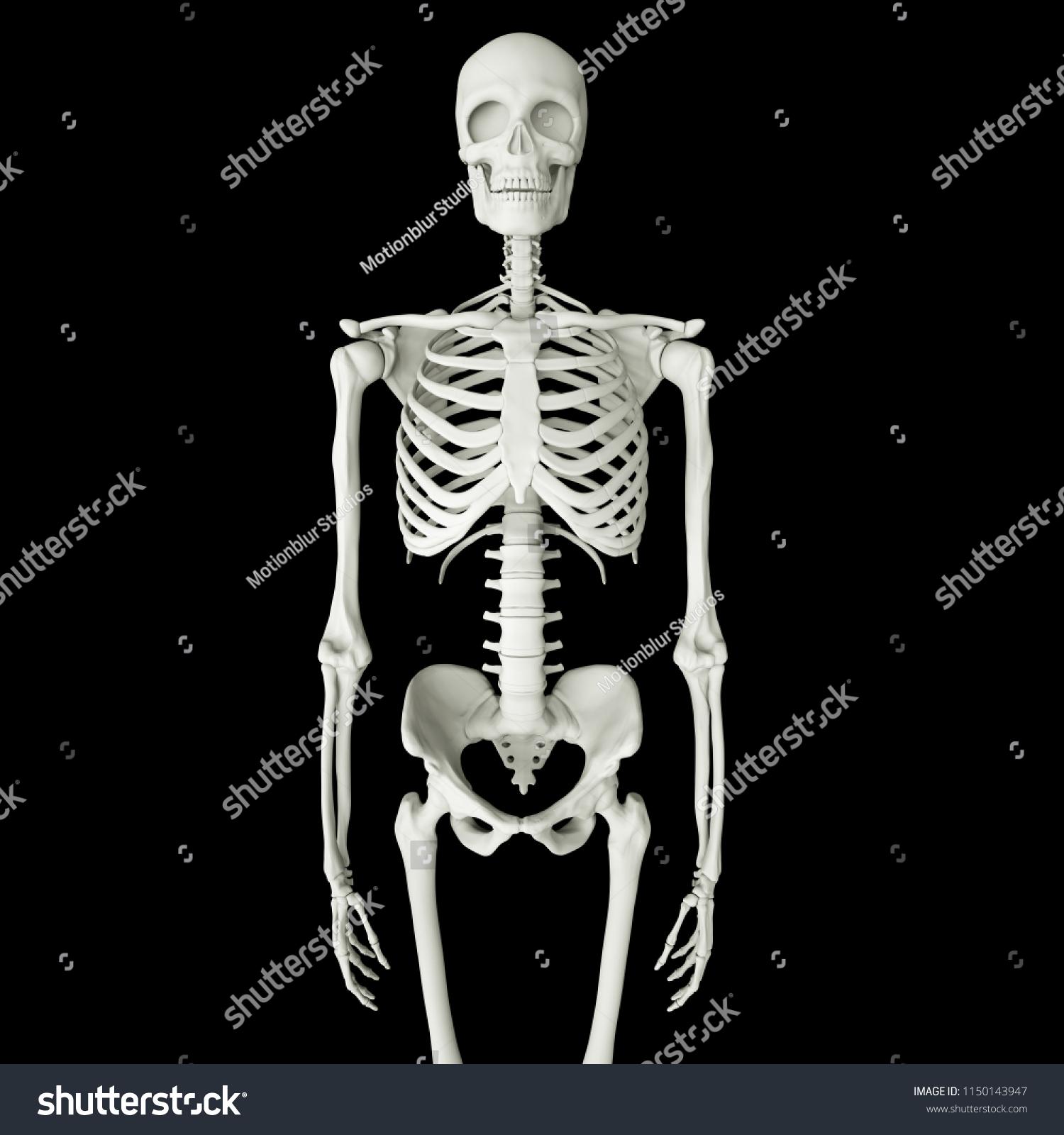 Realistic Human Skeletons Isolated On Black Stock Illustration