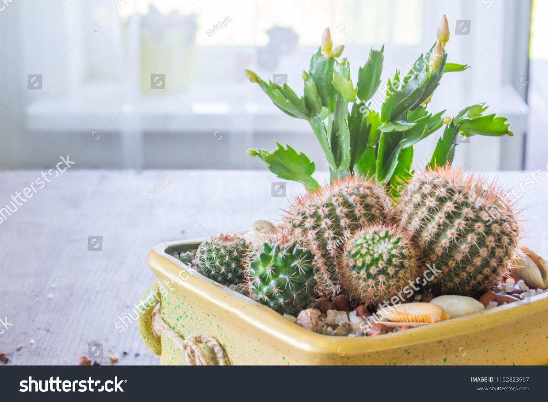 Succulent Mini Garden Cactus Terrarium Ceramic Stock Photo Edit Now