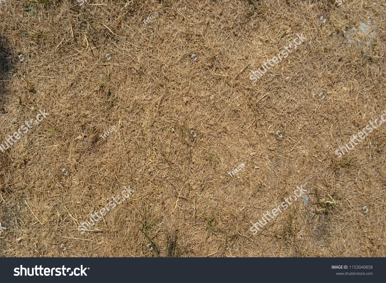 Closeup Photograph Parched Grass Suburban Lawn Stock Photo (Royalty ...