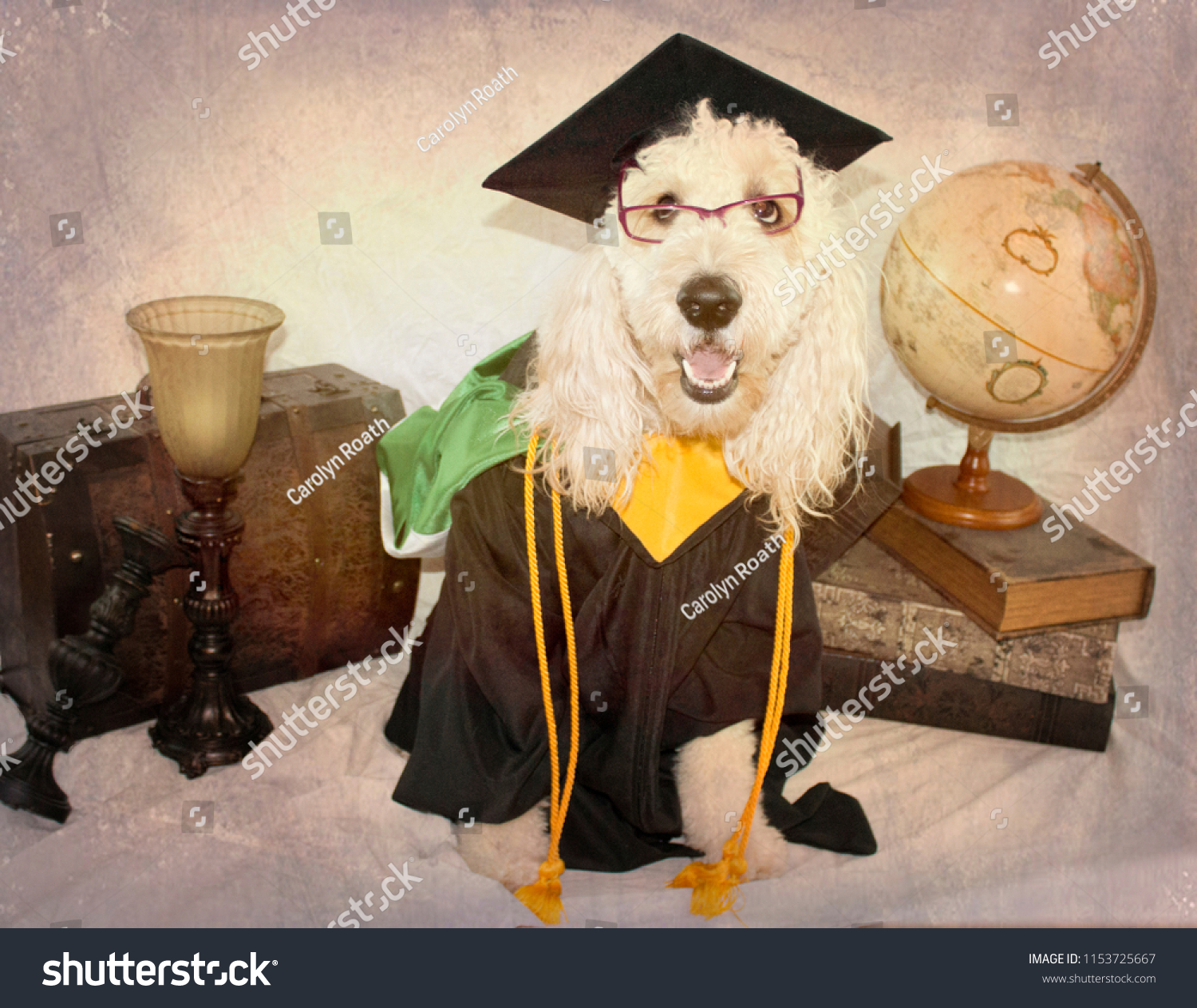 Scholarly Dog Dressed Graduation Cap Gown Stock Photo (Royalty Free ...