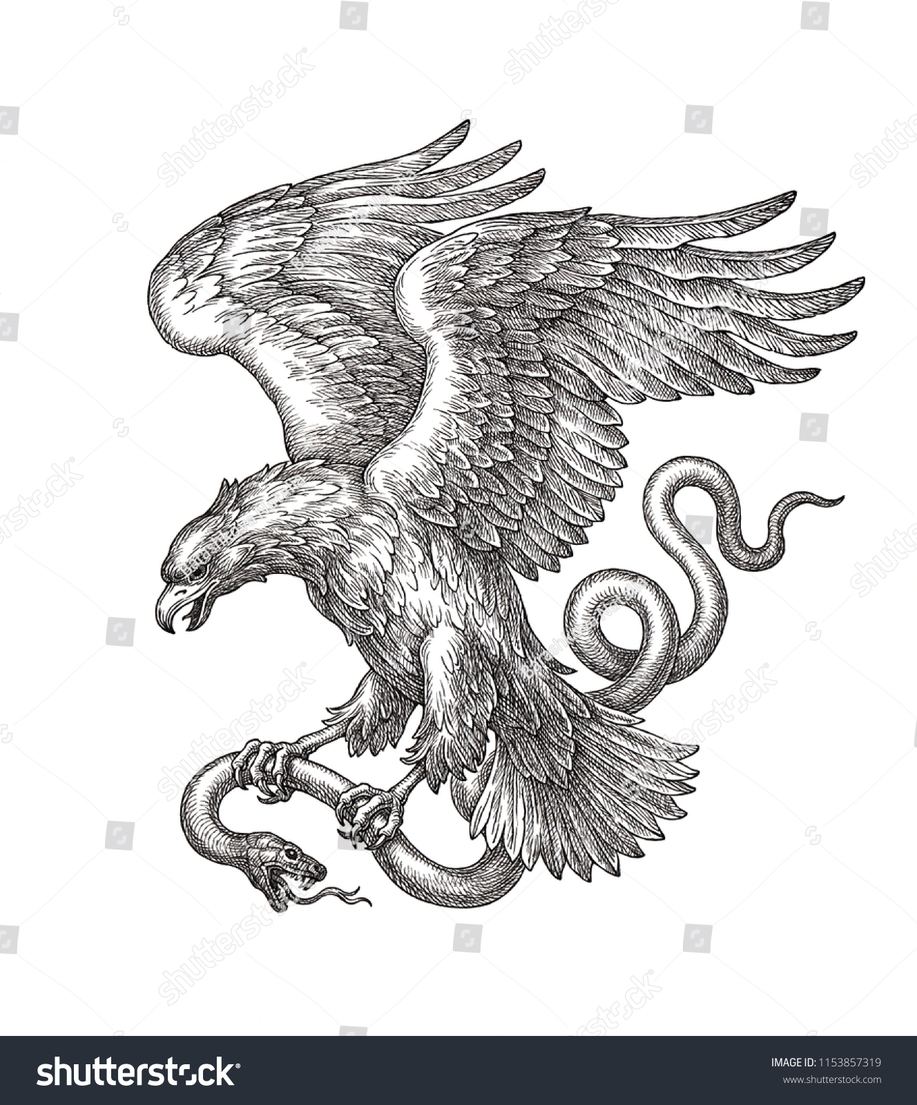 Original hand drawn black and white illustration flying eagle with a snake in claws