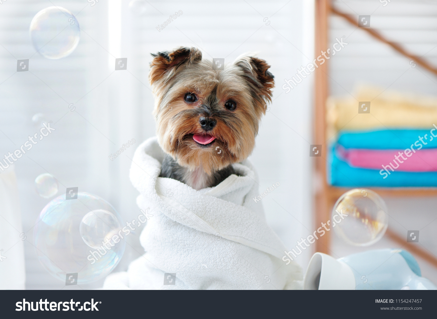 Cute little yorkie dog in a towel after bath #1154247457