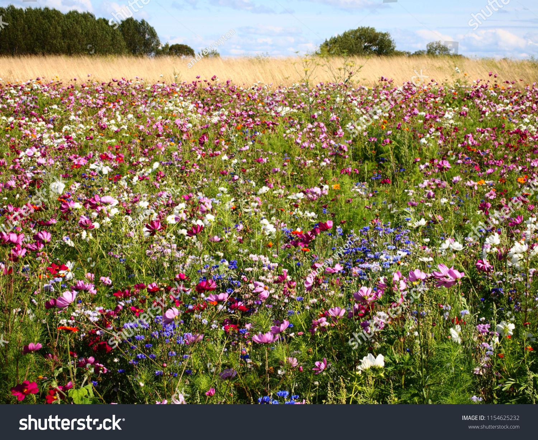 French Wild Flower Field Stock Photo Edit Now 1154625232
