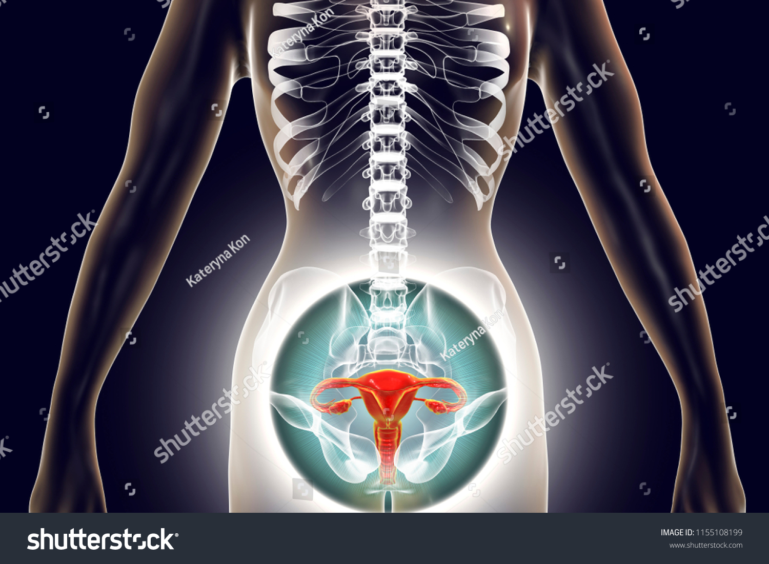 Royalty Free Stock Illustration Of Anatomy Female Reproductive