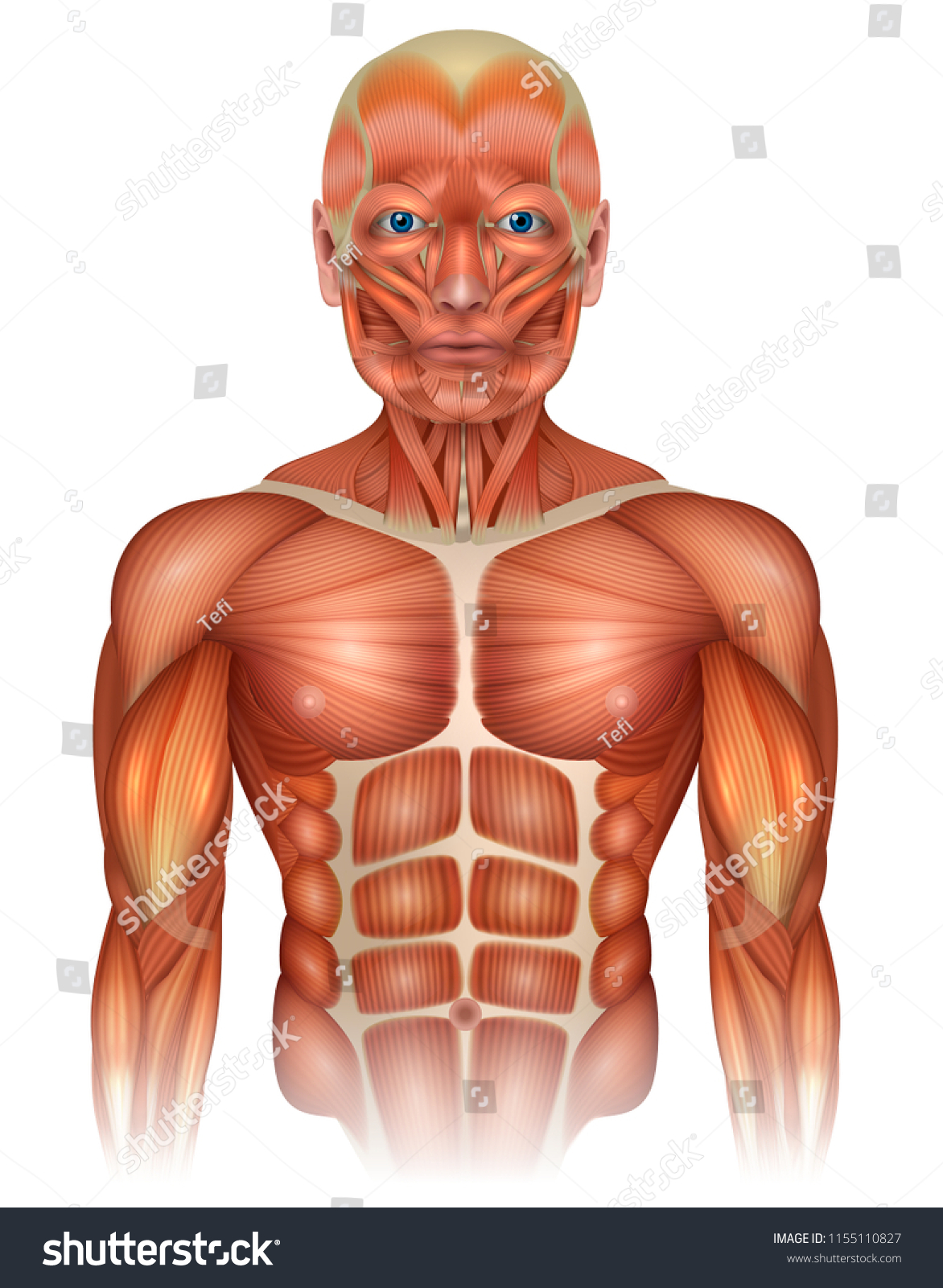Diagram Of Body With Face Wiring Diagrams Lose
