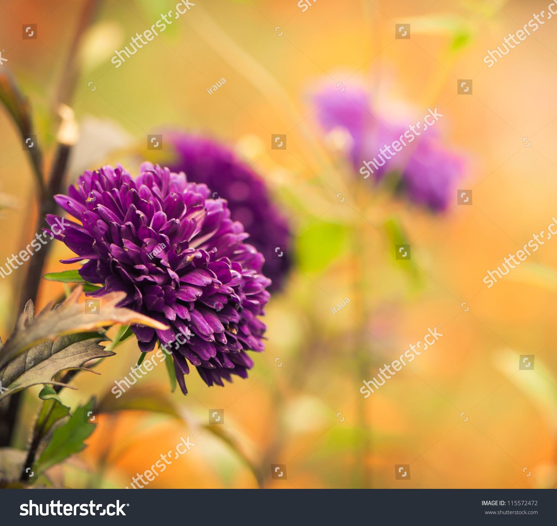 Beautiful Fall Season Flowers Stock Photo Edit Now 115572472