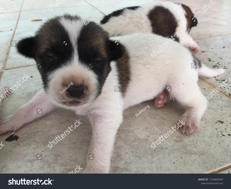 Newborn Puppies Open Their Eyes Stock Photo Edit Now 1156803544