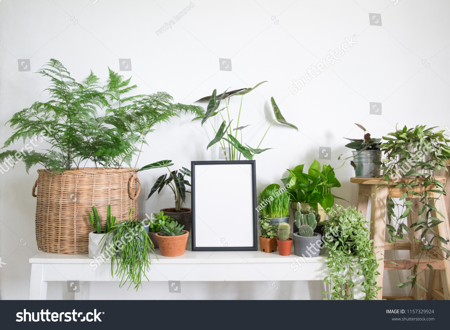 Mock Up Frame Poster With Houseplants In Room Lifestyle Home Decor And Tree Lover Concept
