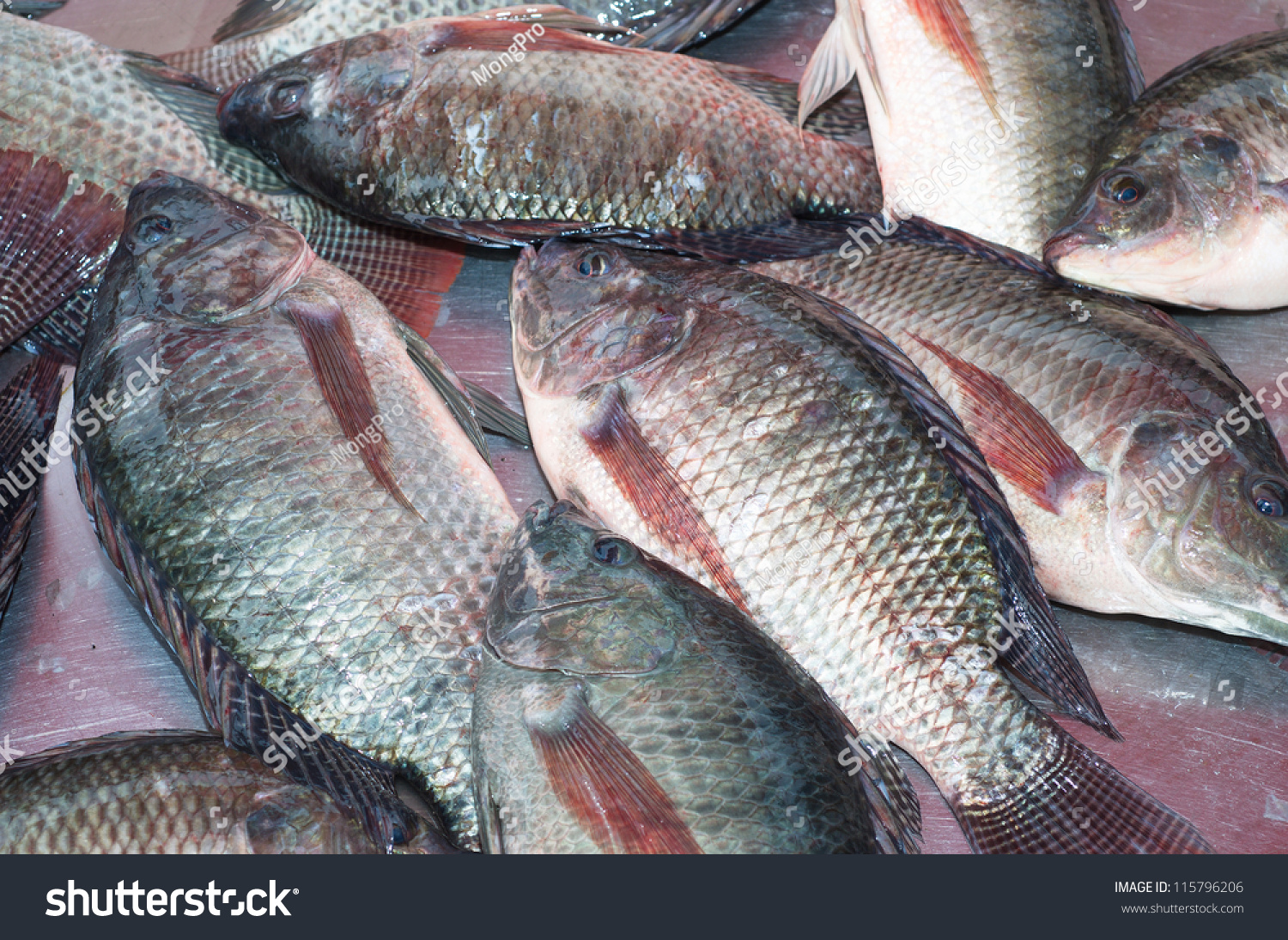 Freshwater fish malaysia - Nile Tilapia Fishes Freshness Ingredient Raw Gourmet Fish Seafood Fin Freshwater Fish Nile Tilapia Malaysia Food