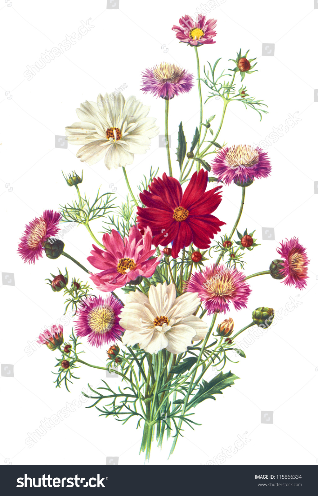 flower illustration stock illustration 115866334