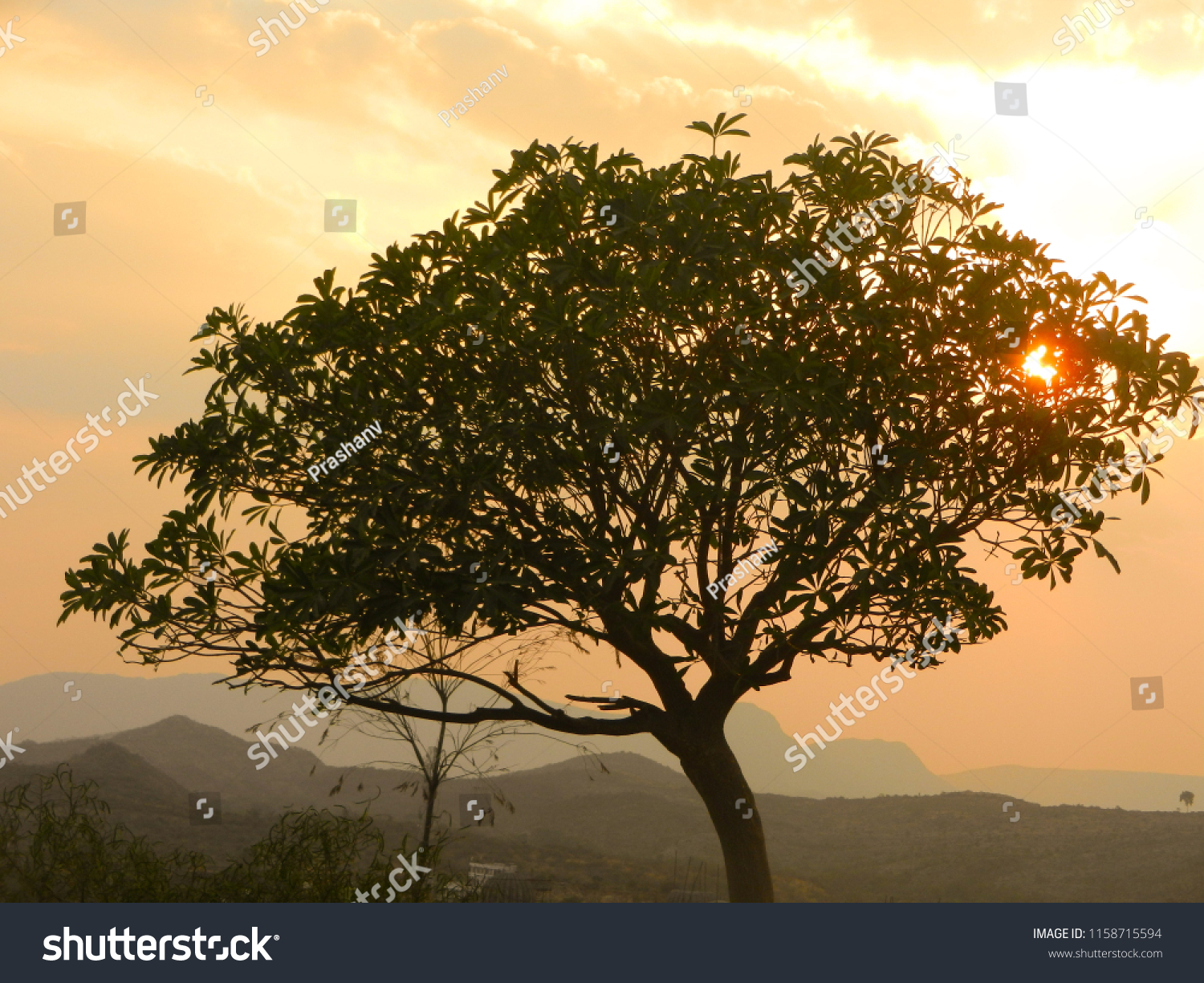 beautiful sun rays coming through neem tree in the evening time