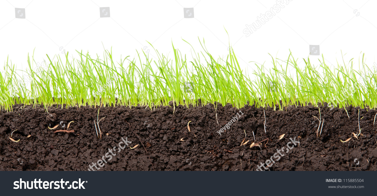 Young green grass crosssection soil stock photo 115885504 for Soil and green