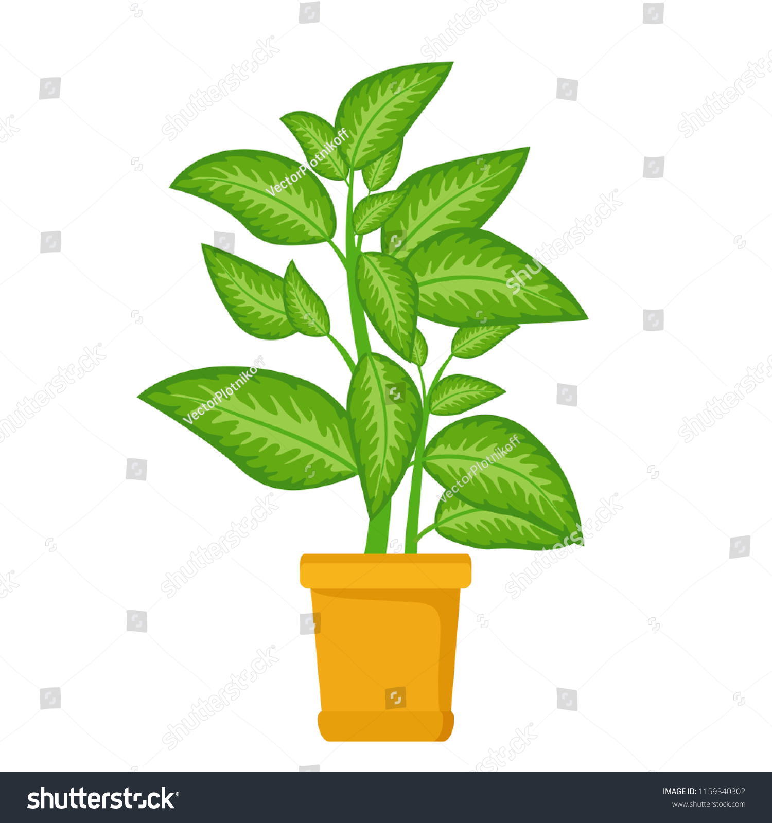 Dieffenbachia Tree House Plant In Flower Pot Decorative Indoor Houseplant