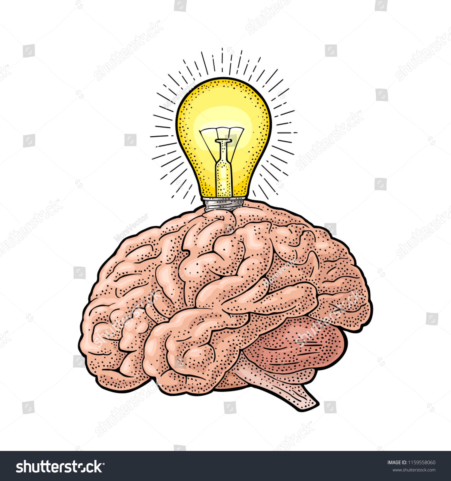 Human Anatomy Brain Glowing Light Incandescent Stock Vector (Royalty ...
